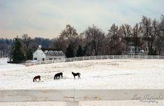 Calumet horse farm in Lexington, KY