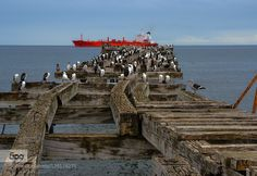 Red Ship in the Ocean - Pinned by Mak Khalaf Old Pier in Chile Travel ChileRedShipTravelVacationbeachbeautifulbeautybluecitycloudsgirlgreenlakelightnightoceanphotopierseaskysummersunsunrisesunsettraveltreetreeswater by PiFiZone