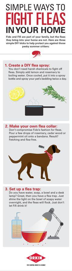 3 Simple Ways to Fight Fleas #DIY