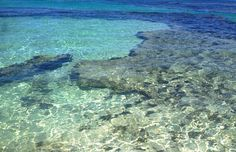 Take me back  #rottnestisland #crystalclear #bluewater #perfectday #australia #perthlife #bestcountryintheworld by kira_anneandrews http://ift.tt/1L5GqLp