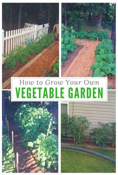 How to Grow Your Own Vegetable Garden