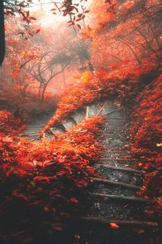 Fall Forest winding stairs. W - C A N V A S : Photo