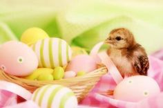 Eggs for Easter: Great Food But Handle Safely