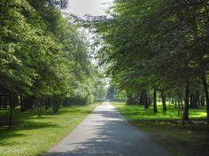 Parc des Coquibus à Évry - Allée entourée de bois