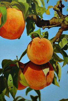 Mustafa Hulusi: Peaches, 2012