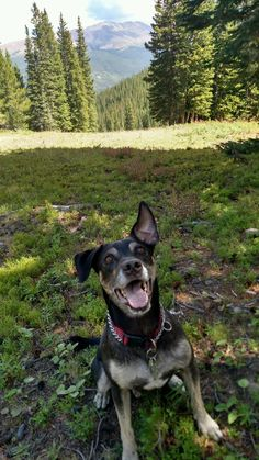 I'm away in NYC for college. My dad just sent me a picture of my dog enjoying the Colorado mountains back home. http://ift.tt/2qrrfWC