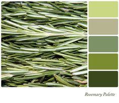 rosemary color