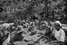 Sebastião Salgado chronicles and celebrates coffee growers Coffee beans being selected by hand for quality. Yirga Cheffe region, Ethiopia 2004. ©SEBASTIAO SALGADO/AMAZONAS IMAGES FOR ILLY