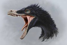 Velociraptor Velociraptor The Effective Pictures We Offer You About animal facts poster Prehistoric Wildlife, Prehistoric World, Prehistoric Creatures, Dinosaur Drawing, Dinosaur Art, Feathered Dinosaurs, Dinosaur Illustration, Dinosaur Pictures, Historia Natural