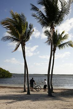 Surrounded by emerald green waters, John Pennekamp State Park is place to explore the underwater reefs or catch a glimpse of South Florida's hammock and marshland.