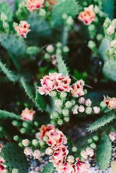mood-cactus_45