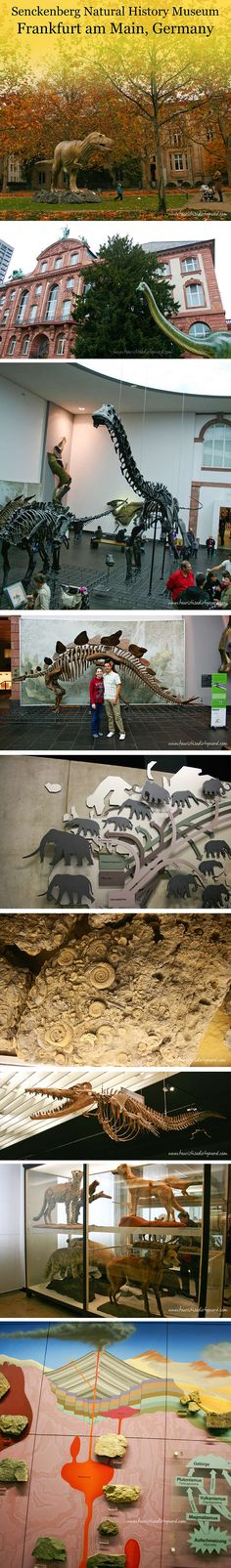 Senckenberg Natural History Museum Overview Guide with Photos • Germany Travel