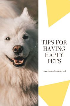 How to keep your dog or cat healthy, happy and calm? Here are some tips from veterinarians, trainers, walkers and specialists. #doglover #dogowner #dogtraining Dog Training Methods, Basic Dog Training, Dog Training Techniques, Big Dogs, I Love Dogs, Dogs And Puppies, Dog Games, Veterinarians, Dog Activities