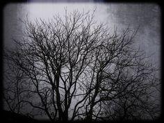 https://flic.kr/p/CvRWUe | Tree without leaves