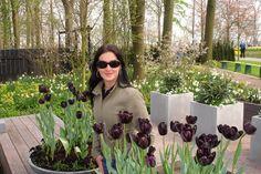 Black Tulips at keukenhof, Lisse, Netherlands