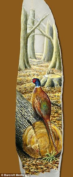Pheasant : Painted swan feathers by Ian Davie