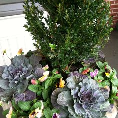 planter with boxwood and fall flowers
