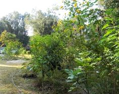 Rather than toiling away with annuals, consider creating an edible perennial food forest.