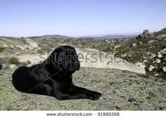 Black Labrador retriever sitting on the mountain path, about 1500 meters high by Claudia Fernandes, via ShutterStock