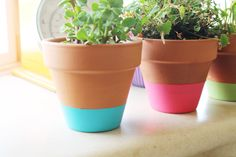 Acute How-To: Color Dipped Flower Pots