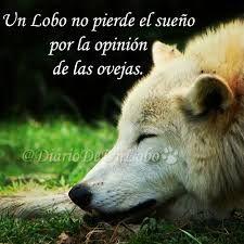 97 Mejores Imágenes De Lobos Wolves Wolf Y Powerful Quotes