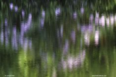 New England Expressionism Photography of a Rhododendron