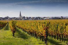 Saint-Nicolas-de-Bourgueil : Touraine, entre vignobles et châteaux - Linternaute