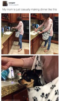 I ain't gonna lie.and, that looks like my dog, lol - Tap the pin for the most adorable pawtastic fur baby apparel! You'll love the dog clothes and cat clothes! Funny Fails, Funny Memes, Hilarious, Cute Dog Photos, Best Funny Pictures, Animal Memes, Funny Animals, Funniest Animals, Dog Stroller