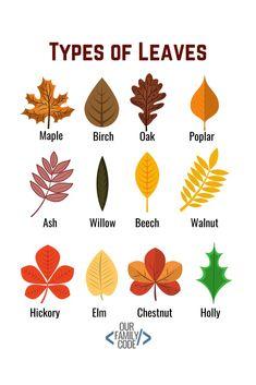 Autumn Crafts, Fall Crafts For Kids, Autumn Art, Nature Crafts, Autumn Theme, Toddler Crafts, Steam Activities, Autumn Activities, Preschool Activities