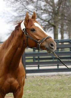 Wise Dan ~ he looked awesome at the Woodford Reserve Turf 2024!!! Just a-maaaaazing!!