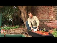 Aquaponics installation with Steve Batley from Sydney Organic Gardens