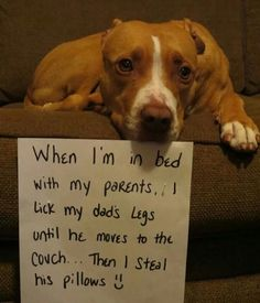 pitbull pup likes to make human dad move to steal his pillow :) Cute Puppies, Cute Dogs, Dogs And Puppies, Doggies, Funny Animal Pictures, Funny Animals, Cute Animals, Animals Dog, I Love Dogs