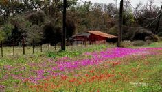:) james a henson tx hill country backroads