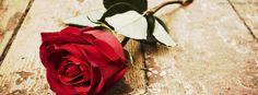 Resultado de imagem para fotos de capa facebook de rosas