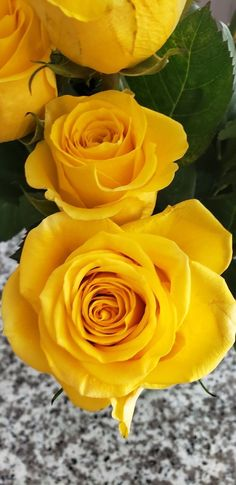 Love Flowers, Yellow Flowers, Different Types Of Flowers, Beautiful Roses, Plants, Gates, Baby, Rose Buds, Wonderful Flowers