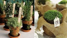 Lembrança de casamento ecológica - ervas / Souvenir wedding ecological - spices