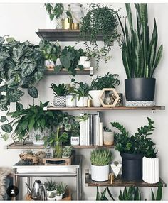 » plant life » indoor houseplants » boho decor » jungalow » cacti & succulents »
