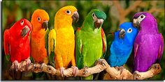 A Rainbow of Parrots  Must be getting Ready for Pride !