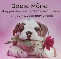 Wish Quotes, Funny Quotes, Qoutes, Happy Birthday Wishes Quotes, Afrikaanse Quotes, Goeie More, Good Night Quotes, Good Morning Wishes, Special Quotes