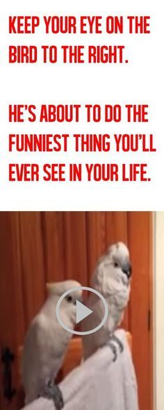 (Idr if pinned but still funny)The longer you watch this video, the funnier it gets! LOL!!