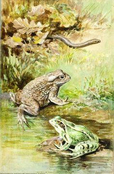 Slow-Worm, Toad and Frog