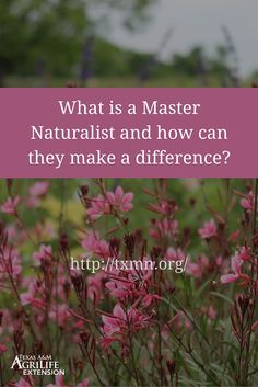[VIDEO] What is a Texas Master Naturalist & how do they make a difference?