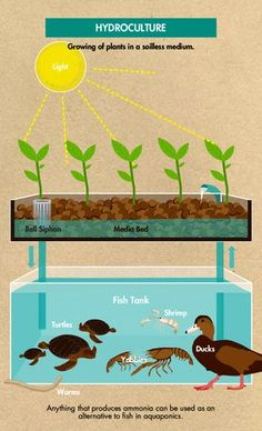 "Alternatives to fish for aquaponics - DIY Gardening & Better Living More ""Break-Through Organic Gardening Secret Grows You Up To 10 Times The Plants, In Half The Time, With Healthier Plants, While the Fish Do All the Work. Aquaponics System, Hydroponic Farming, Aquaponics Greenhouse, Hydroponic Growing, Growing Plants, Aquaponics Plants, Fish Tank Aquaponics, Best Fish For Aquaponics, Diy Hydroponics"