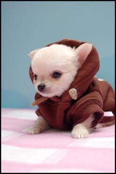 Obi Awwn Kenobi.