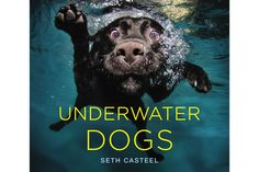 The 30 Most Stunning Coffee Table Books From The Last 5 Years #refinery29  http://www.refinery29.com/2016/12/131972/29-best-coffee-table-books-of-2016#slide-4  Underwater DogsBy Seth CasteelSometimes you really can judge a book by its cover — this one is filled with even more adorable pups exploring the water just like this guy....