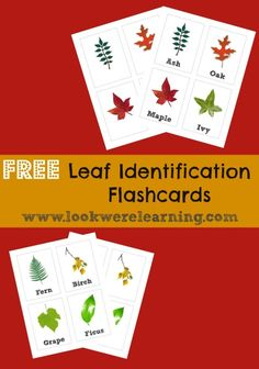 Free Printable Flashcards: Leaf Identification - Look! We're Learning!