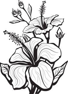 Download Sketch of hibiscus flowers stock vector. Image of scent - 19061339