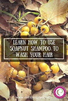 Have you ever heard of soap nuts before? Have you ever used soapnut shampoo on your hair? If so, what is your experience as far as how well it cleans your hair?