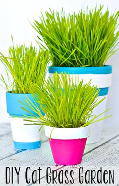 This simple tutorial shows you how to paint terra cotta pots to create an indoor cat grass garden for your cats! A DIY project your cats are sure to love!