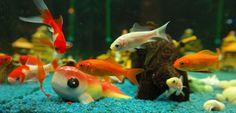 Así se realiza el transporte de peces vivos - http://www.depeces.com/asi-se-realiza-el-transporte-de-peces-vivos.html